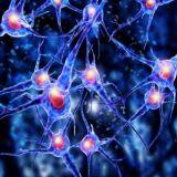 Скачать нейросетевую автоматическую торговую систему Форекс